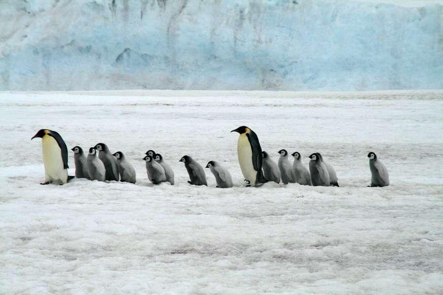 emperor penguins 2821897 960 720 e1549369837285 - ANTARKTYDA – PODRÓŻ PRZEZ TRZY KONTYNENTY: Rejs z Nowej Zelandii do Argentyny