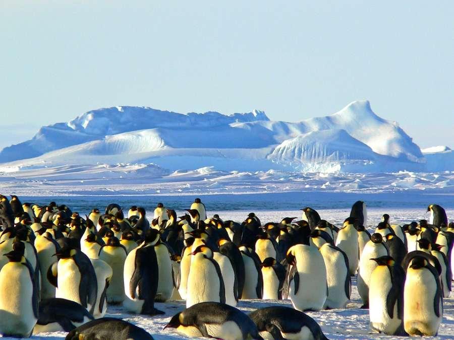 emperor penguins 429127 960 720 e1549369847736 - ANTARKTYDA – PODRÓŻ PRZEZ TRZY KONTYNENTY: Rejs z Nowej Zelandii do Argentyny