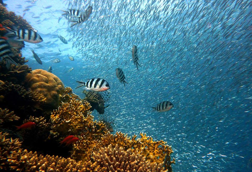 fish 378286 960 720 - AUSTRALIA, NOWA ZELANDIA, FIDŻI i TONGA - Wielka Wyprawa Marzeń