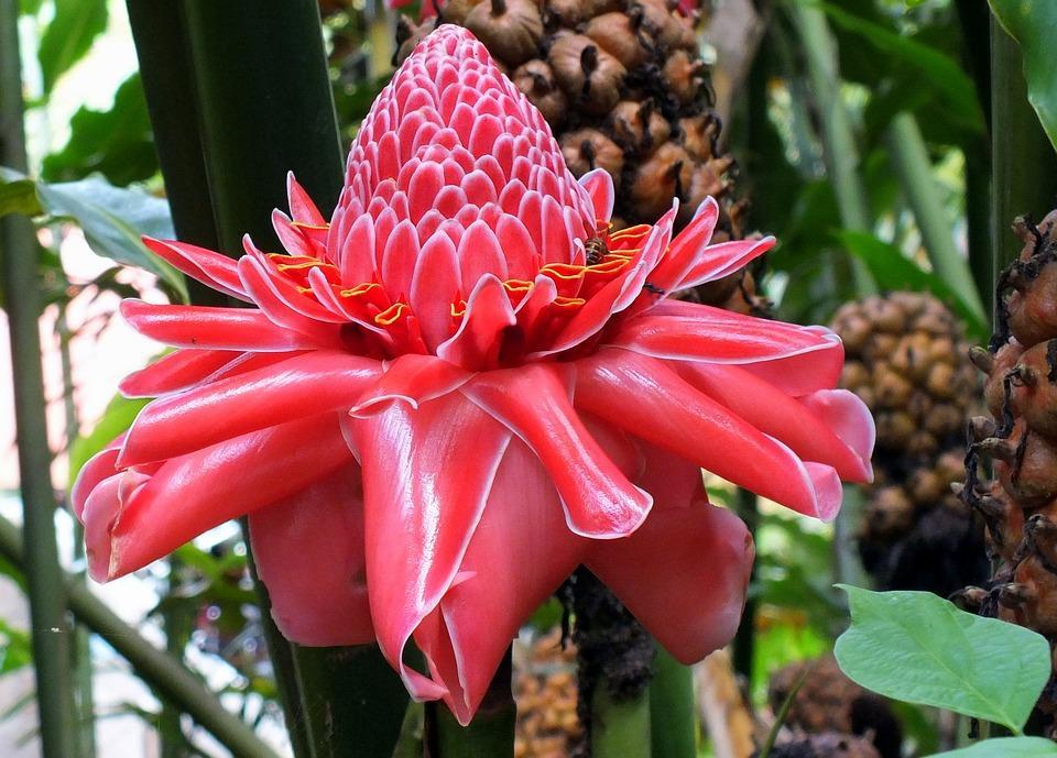 flower 2610485 960 720 - FILIPINY: Bohol, Cebu, El Nido, Palawan, Manila i tarasy ryżowe Bangaan - wycieczka
