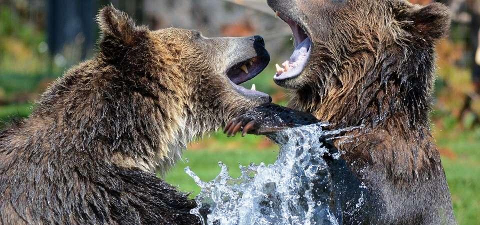 KANADA ZACHODNIA - ALASKA: Niedźwiedzie Grizzly w Parku Narodowym Katmai – niezwykła wyprawa
