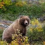 wycieczki na Alaske