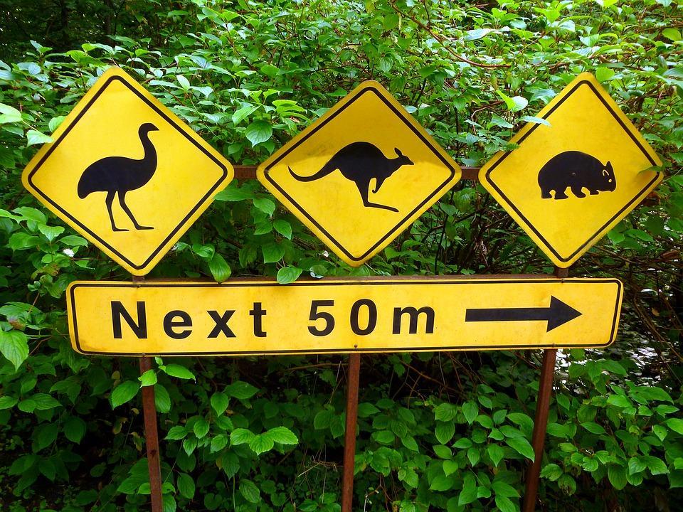 hinweisschilder 2860091 960 720 - AUSTRALIA z Tasmanią: kangury, psy dingo, diabły tasmańskie i misie koala – wyprawa