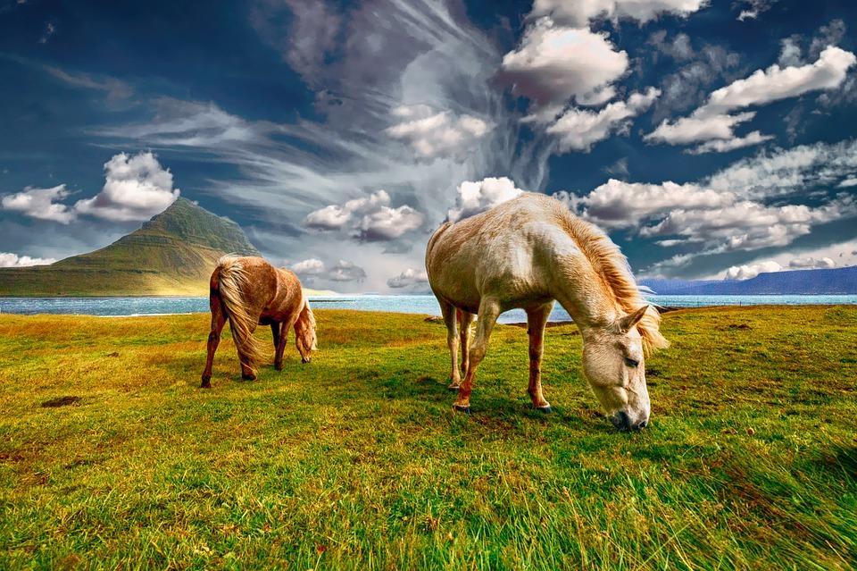horses 2427513 960 720 - ISLANDIA: magiczna wyprawa dookoła wyspy