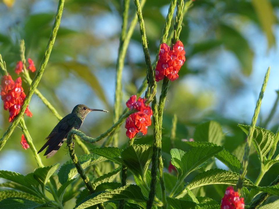 hummingbird 2523699 960 720 - 8 KRAJÓW AMERYKI ŚRODKOWEJ