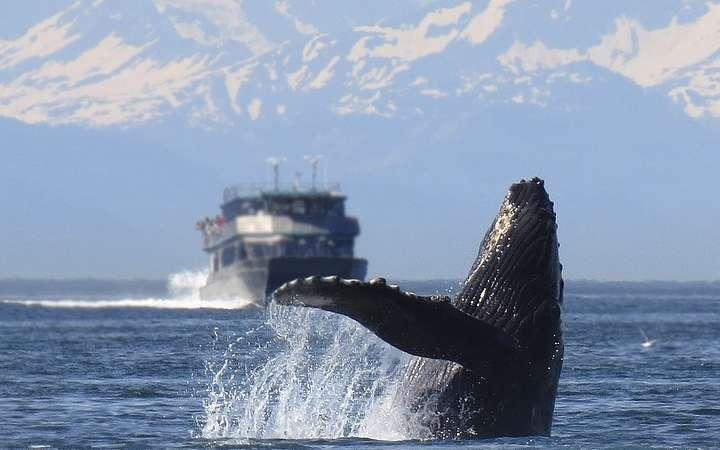 ARGENTYNA: obserwacja wielorybów na Półwyspie Valdes