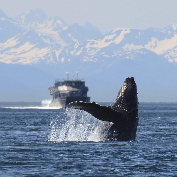 humpback 1132769 960 720 - ARGENTYNA: obserwacja wielorybów na Półwyspie Valdes