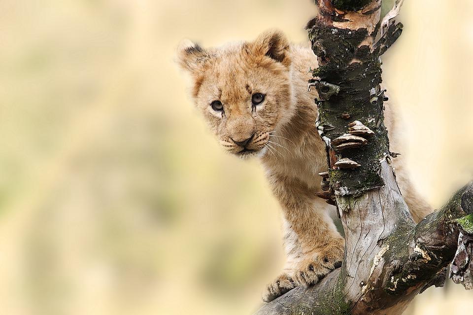 lion 565820 960 720 - TANZANIA I ZANZIBAR