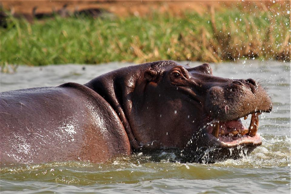 mammal 3230968 960 720 - UGANDA – Perła Afryki