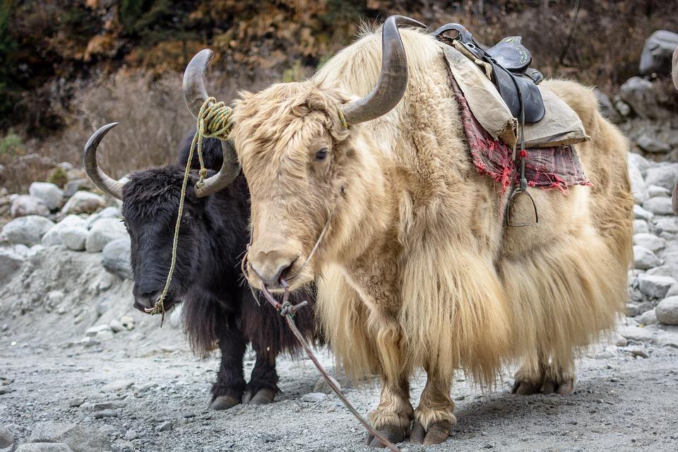 manali 1978065 960 720 - INDIE - Ladakh – Kaszmir: wyprawa na Festiwal Hemis Tsechu