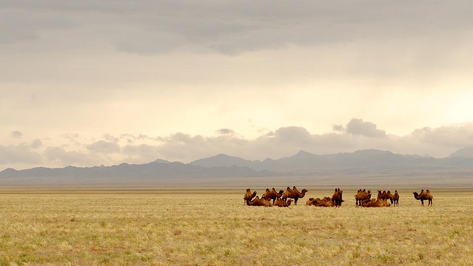 cuda Mongolii