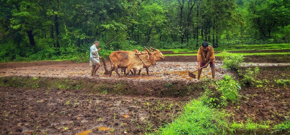 nature 2795521 960 720 - INDIE: Radżastan i wycieczka na Goa