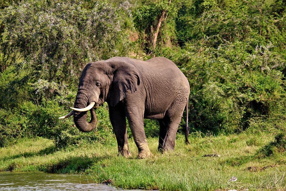 nature 3230970 960 720 - UGANDA – Perła Afryki