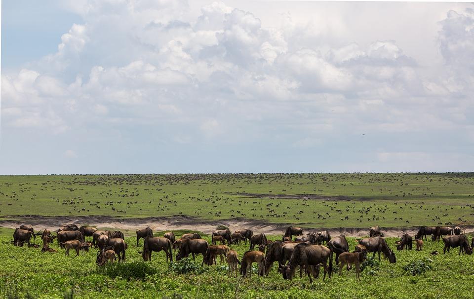 ngorongoro conservation area 2735629 960 720 - TANZANIA I ZANZIBAR