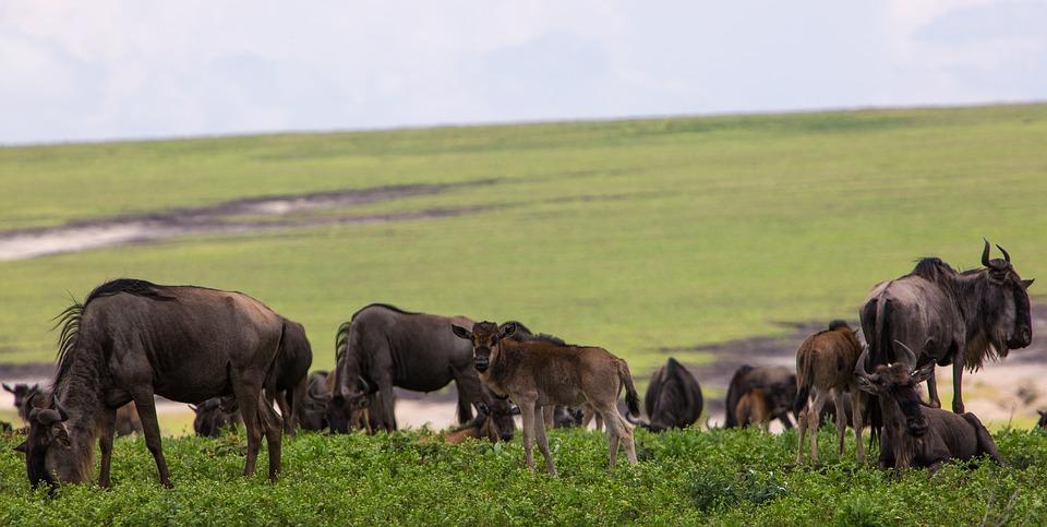 ngorongoro conservation area 2735636 960 720 - TANZANIA I ZANZIBAR