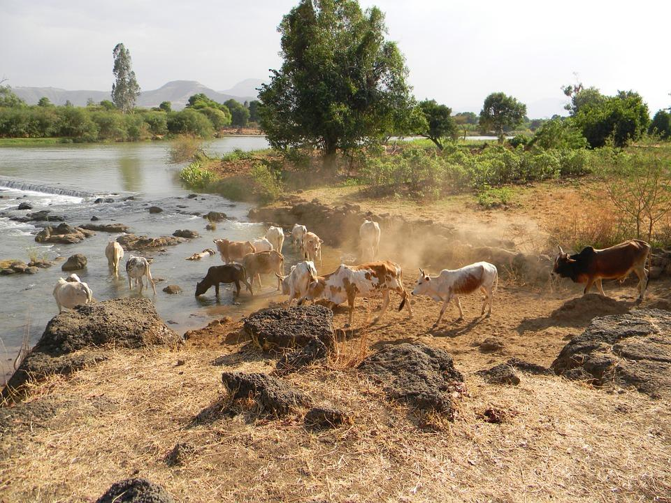 nile 606917 960 720 - ETIOPIA: wyprawa na Północ i Południe