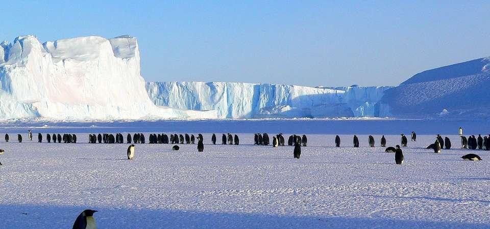 [Obrazek: penguins-429136_960_720-960x450.jpg]