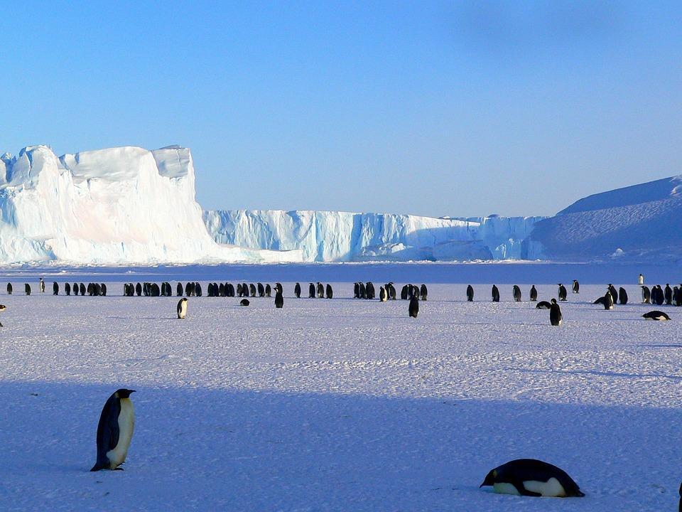 penguins 429136 960 720 - ANTARKTYDA – PODRÓŻ PRZEZ TRZY KONTYNENTY: Rejs z Nowej Zelandii do Argentyny