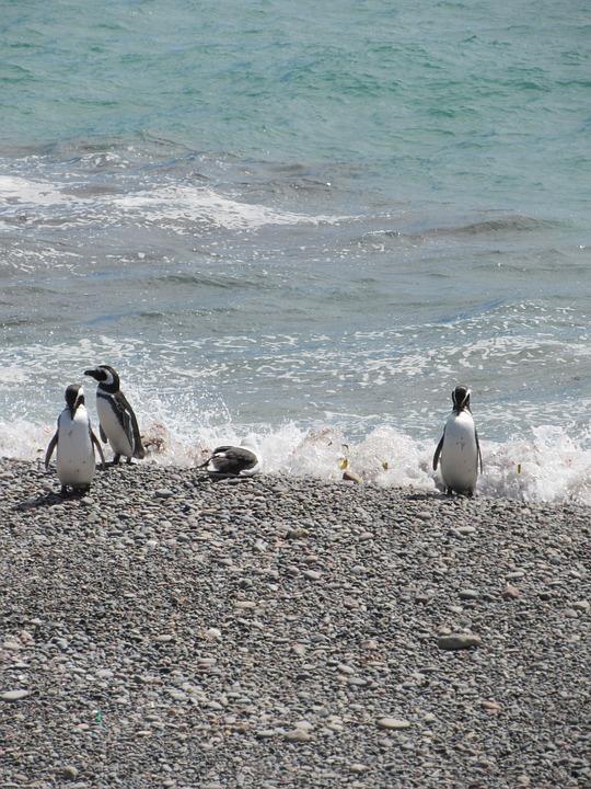 punta tombo 2907777 960 720 - ARGENTYNA: obserwacja wielorybów na Półwyspie Valdes