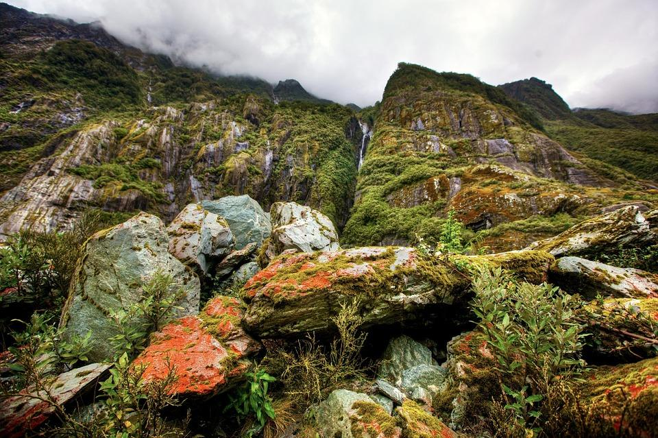 rainforest 49878 960 720 - AUSTRALIA, NOWA ZELANDIA, FIDŻI i TONGA - Wielka Wyprawa Marzeń