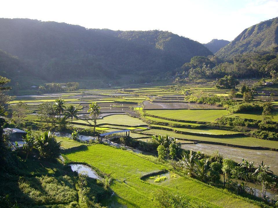 rice fields 2806859 960 720 - FILIPINY: Bohol, Cebu, El Nido, Palawan, Manila i tarasy ryżowe Bangaan - wycieczka