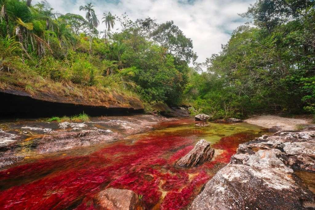 rzeka cano cristales07 1024x681 - KOLUMBIA - Cano Cristales, Medelin, Cartagena i Wyspy Różańcowe