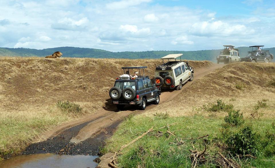 safari 1845202 960 720 - TANZANIA I ZANZIBAR