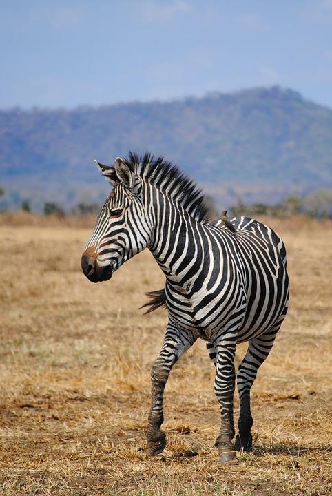 safari 2042756 960 720 - TANZANIA I ZANZIBAR