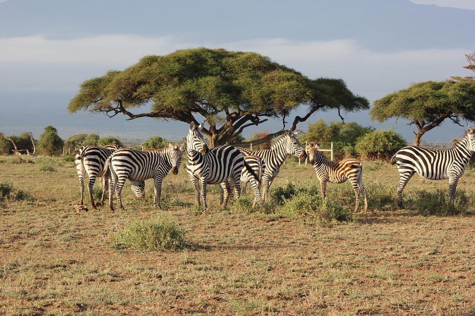 safari 2833277 960 720 - KENIA: wyprawa nad Jezioro Turkana: Nefrytowe Morze Afryki