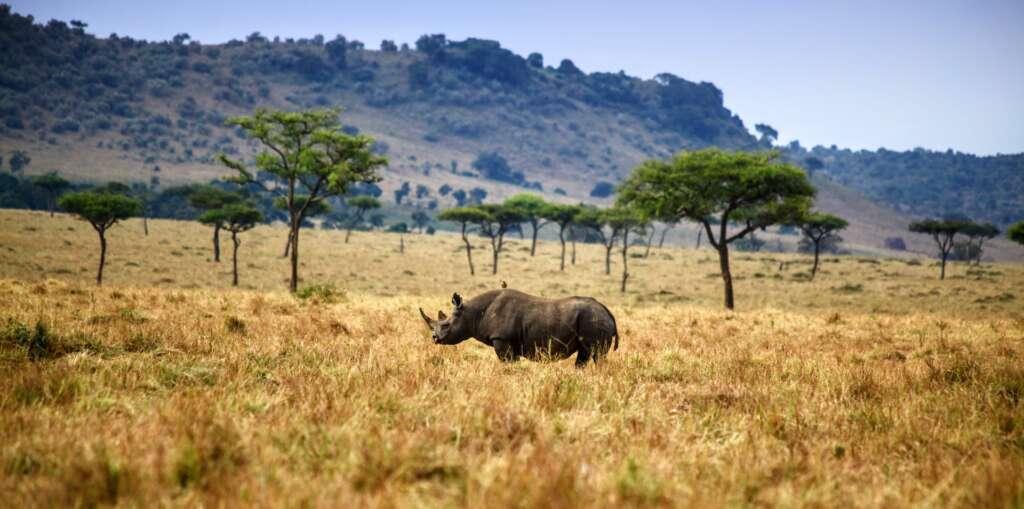 shripal daphtary yCw16KBrMfY unsplash 1024x509 - RWANDA – UGANDA