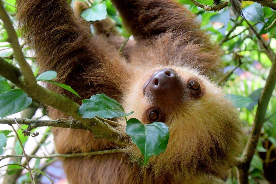 sloth 1879999 960 720 - 8 KRAJÓW AMERYKI ŚRODKOWEJ