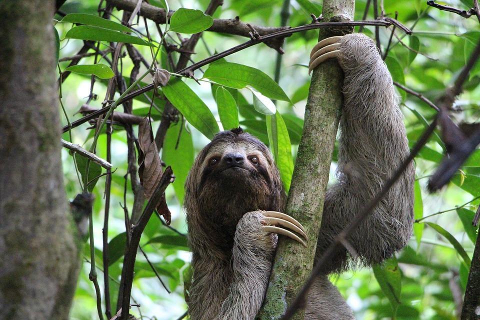sloth 2759724 960 720 - 8 KRAJÓW AMERYKI ŚRODKOWEJ