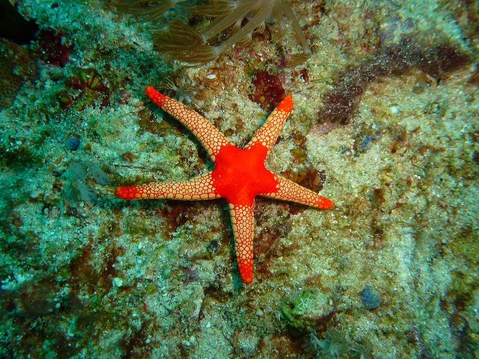 star fish 2327985 960 720 - FILIPINY: Bohol, Cebu, El Nido, Palawan, Manila i tarasy ryżowe Bangaan - wycieczka