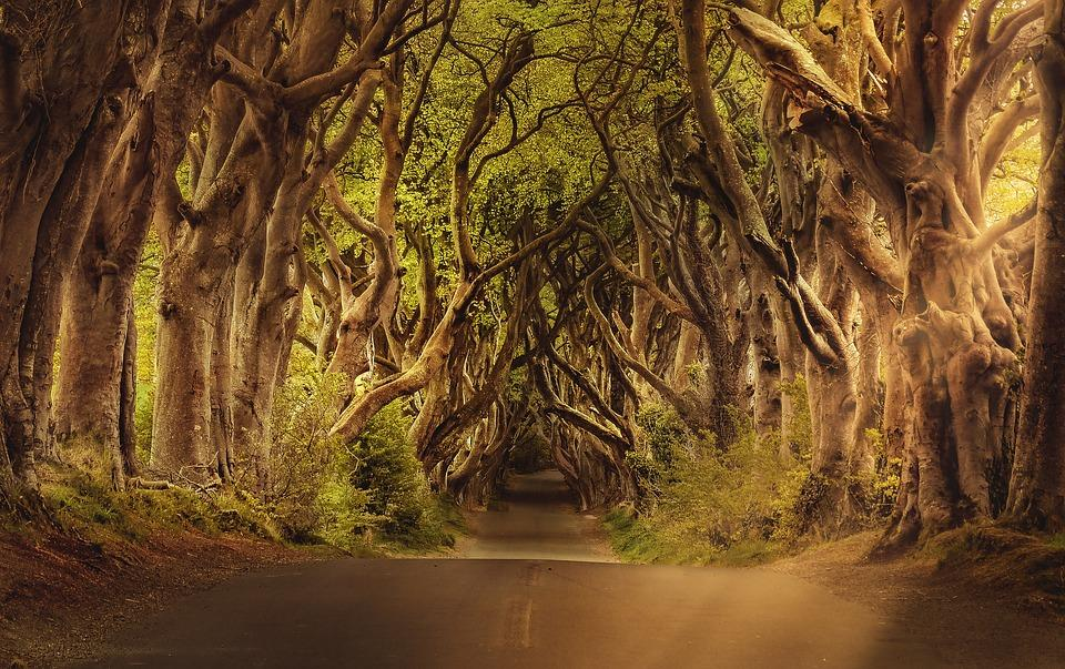 trees 3464777 960 720 - IRLANDIA & Irlandia Północna