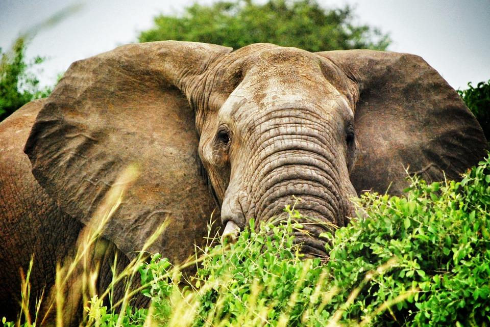 uganda 251921 960 720 - UGANDA – Perła Afryki