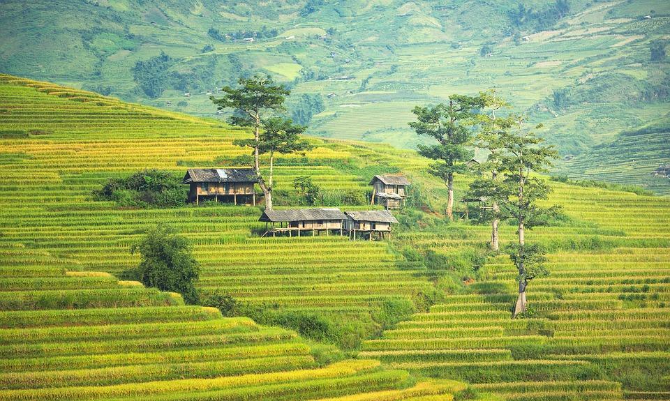 vietnam 1822441 960 720 - PAPUA ZACHODNIA – wyprawa w nieznane