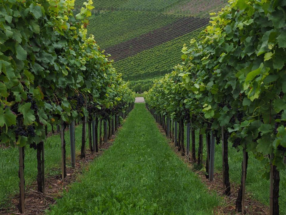 vineyard 694178 960 720 - MOŁDAWIA z Gagauzją i Naddniestrzem