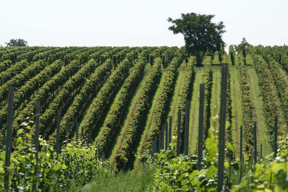 vineyard 836200 960 720 - MOŁDAWIA z Gagauzją i Naddniestrzem