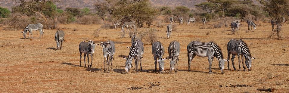 zebra 2668655 960 720 - KENIA: wyprawa nad Jezioro Turkana: Nefrytowe Morze Afryki