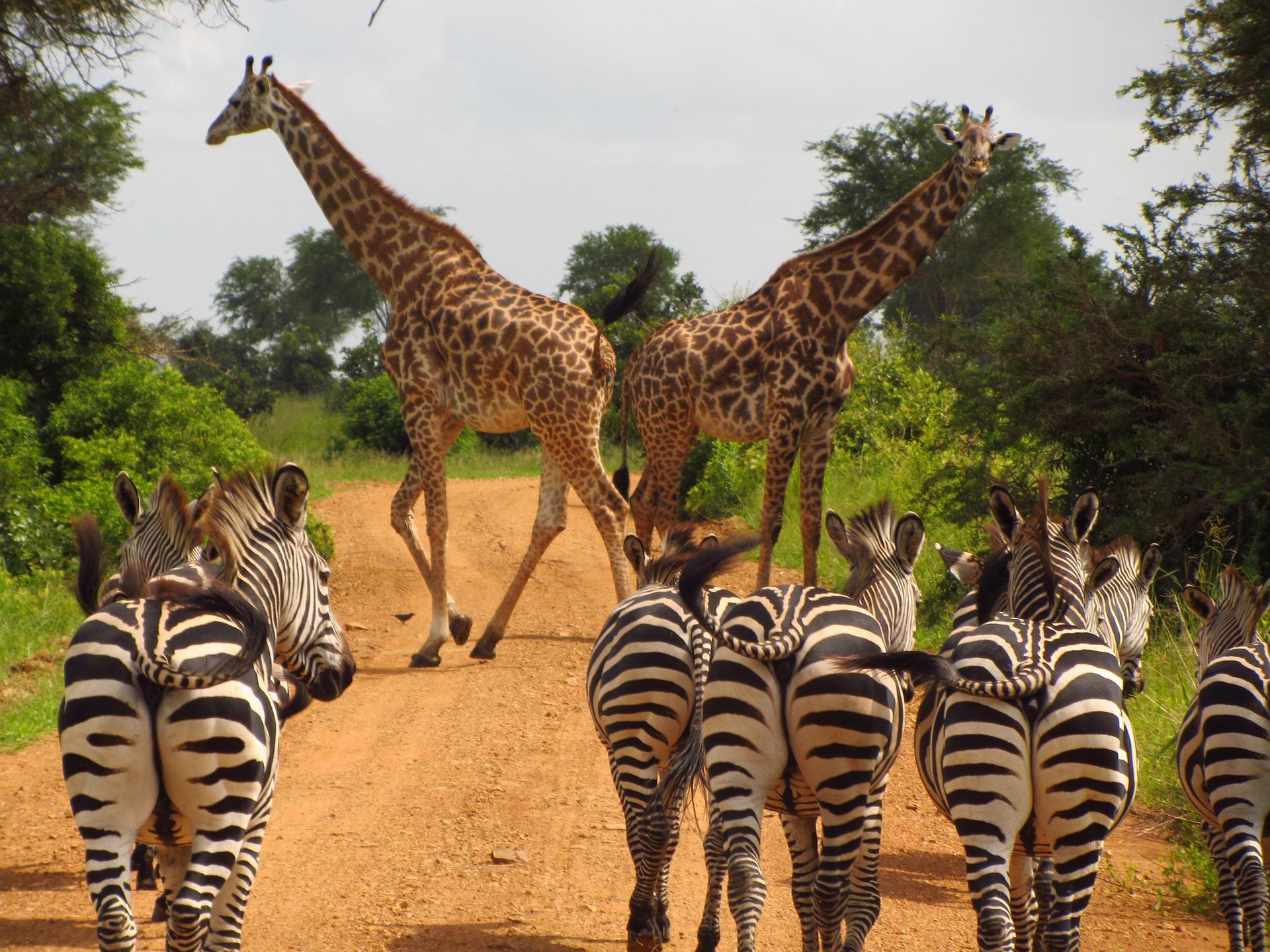wycieczka TANZANIA