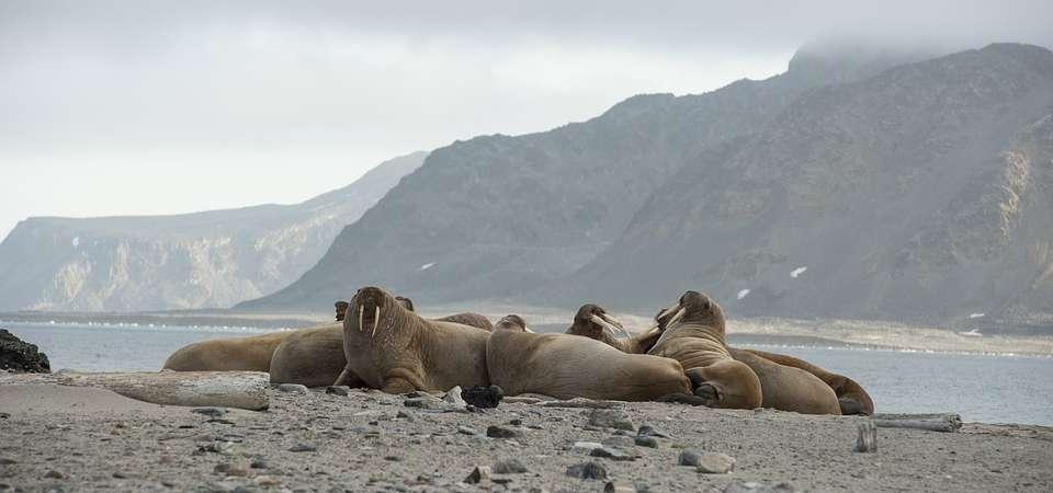SPITSBERGEN: wyspa na dachu świata – rejs arktyczny