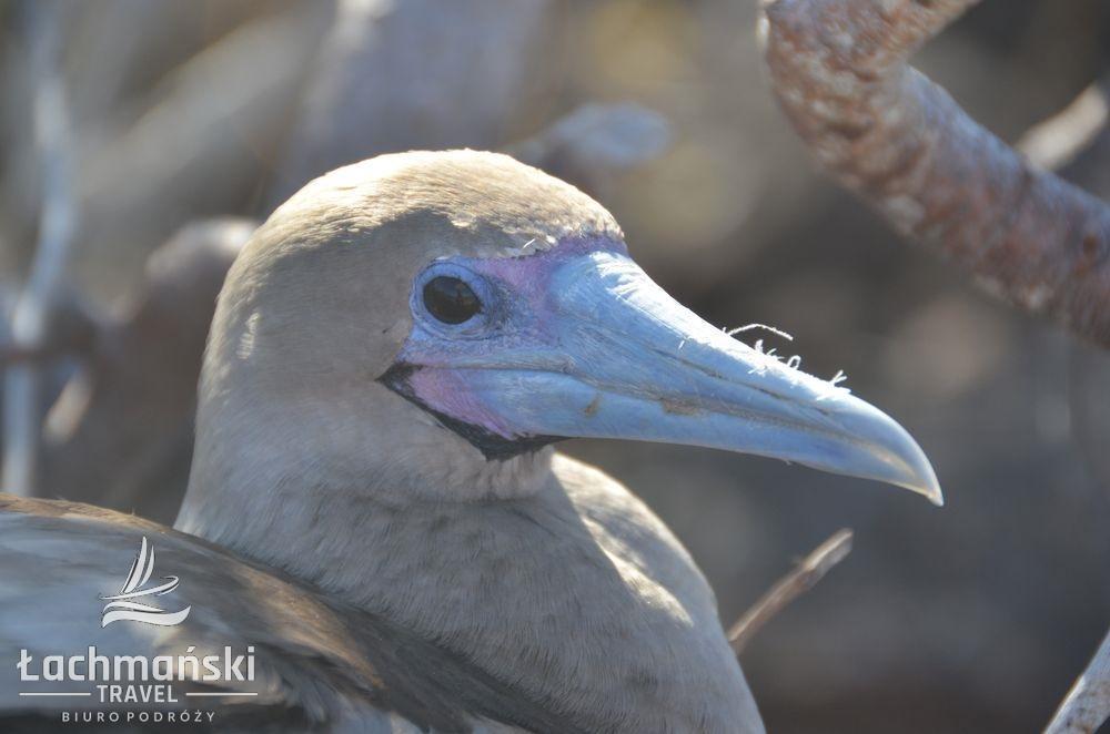 DSC 8759 wm - Galapagos- fotorelacja Bogusława Łachmańskiego