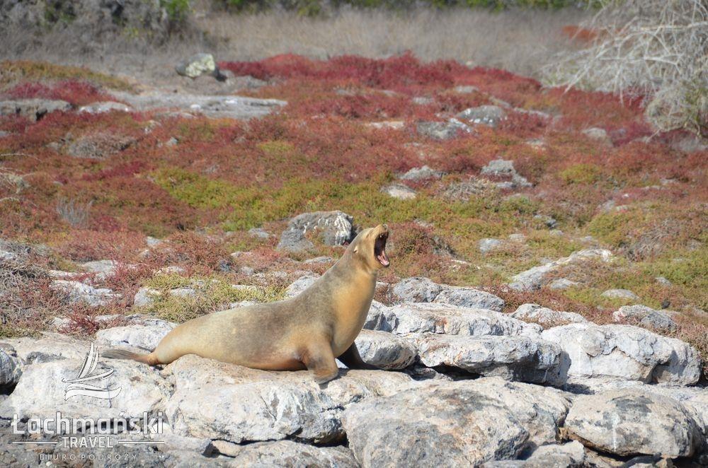 DSC 8992 wm - Galapagos- fotorelacja Bogusława Łachmańskiego