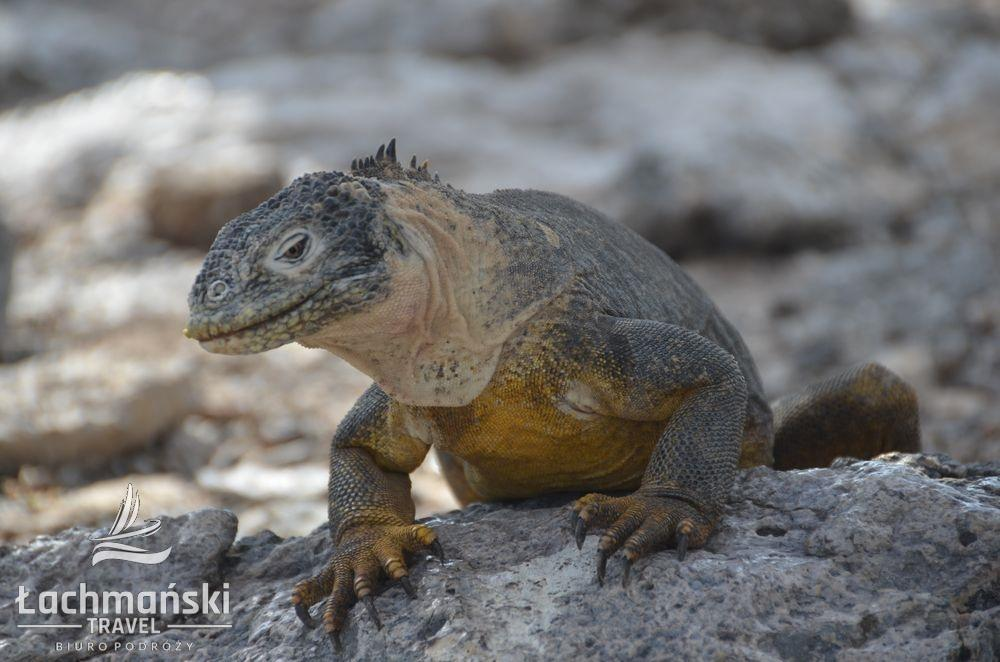 DSC 9053 wm - Galapagos- fotorelacja Bogusława Łachmańskiego