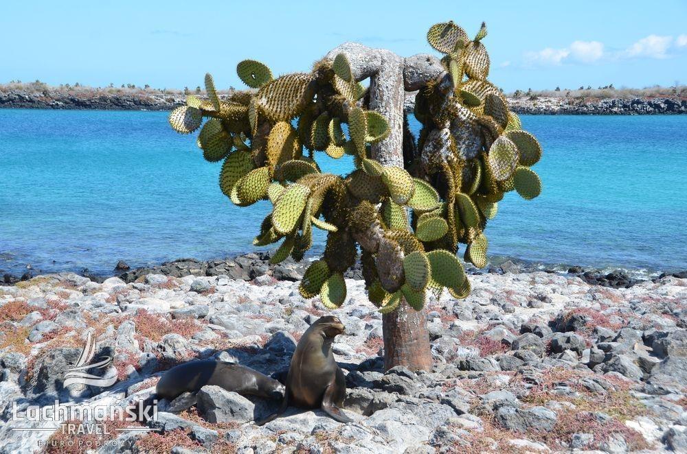 DSC 9336 wm - Galapagos- fotorelacja Bogusława Łachmańskiego