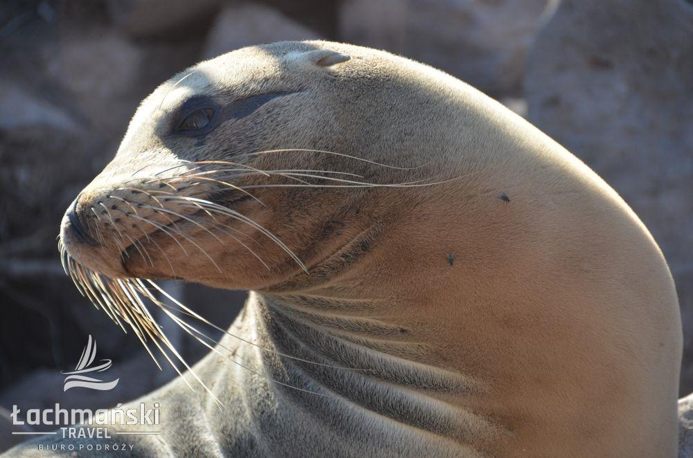 DSC 9586 wm - Galapagos- fotorelacja Bogusława Łachmańskiego