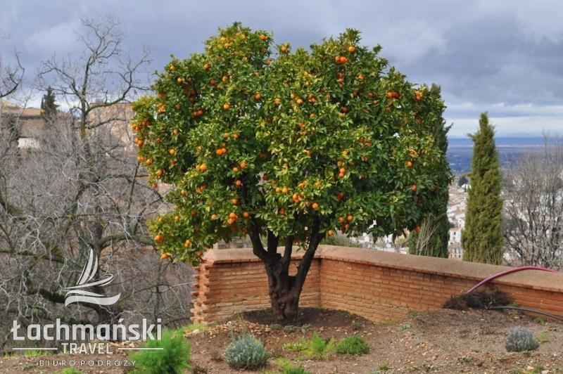 DSC 0827 wm - Andaluzja i Gibraltar - fotorelacja Dominiki Stańka