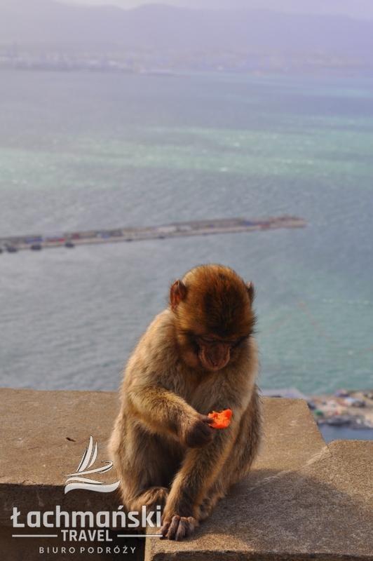 DSC 0961 wm - Andaluzja i Gibraltar - fotorelacja Dominiki Stańka