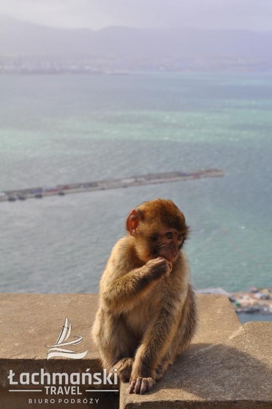DSC 0962 wm - Andaluzja i Gibraltar - fotorelacja Dominiki Stańka