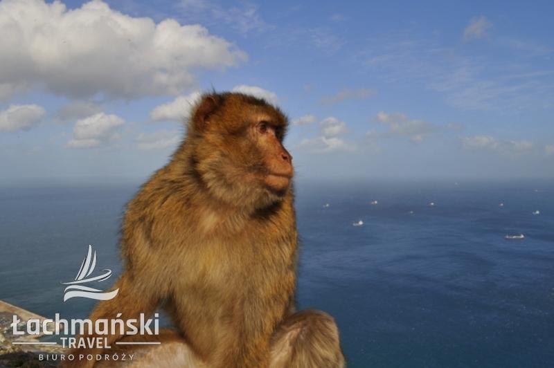DSC 0996 wm - Andaluzja i Gibraltar - fotorelacja Dominiki Stańka